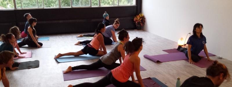 montreal-yoga-pigeon
